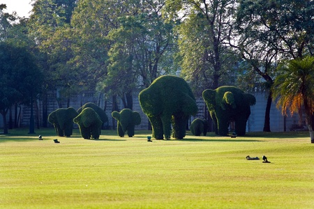 bushes cut to animal figures, Elephants,  in the park  Stock Photo - 9325736