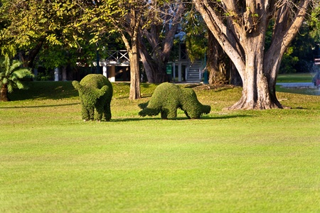 bushes cut to animal figures in the park  Stock Photo - 9325648