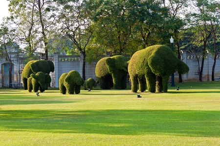bushes cut to animal figures, Elephants, in the park  Stock Photo - 9326213