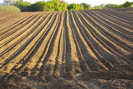 Background of newly plowed field Stock Photo - 9349407