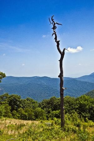 Beautiful view of the popular Blue Ridge  Mountain in Shenandoah national park photo
