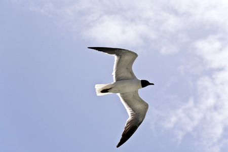 flying seagulls over the ocean photo