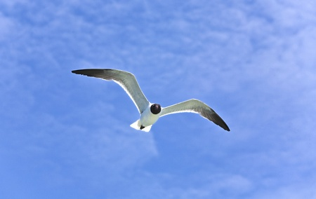 flying seagulls over the ocean Stock Photo - 9367382