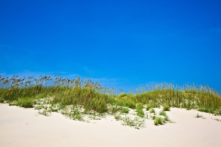 outerbanks: tall grass on a beach during stormy season