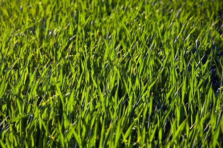 structured: structured grass with dew in morning light
