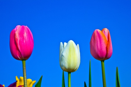 Spring field with blooming colorful tulips Stock Photo - 9374917