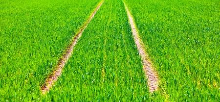 swerve: marks of wheels in green field in springtime