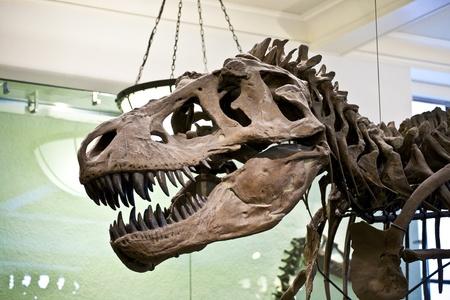 extinction: NEW YORK - 8 juillet: Le Mus�e am�ricain d'histoire nationale � Newe York d�tient une importante collection de squelettes de dinosaures et l'homme aussi praehistoric expositions de partout dans le monde. Ouvert pour le public � Juillet 8,2010, New York, Etats-Unis.