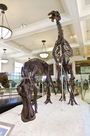 extinction: NEW YORK - 8 juillet: Le Mus�e am�ricain d'histoire nationale � Newe York d�tient une importante collection de squelettes de dinosaures et d'expositions praehistoric aussi humain de partout dans le monde. Ouverte au public � Juillet 8,2010, New York, Etats-Unis. �ditoriale