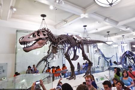 NEW YORK - JULY 8: The American Museum for National History in Newe York holds a large collection of dinosaur skeletons and praehistoric also human exhibits from all over the world.  Open for public at July 8,2010, New York,  USA.