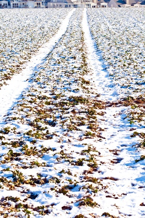 mark of tire on snow field in wintertime Stock Photo - 9692567