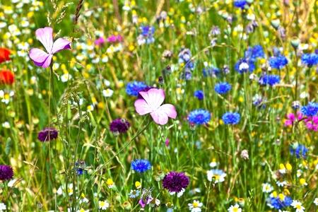 schöne Withcolorful-Wiesenblumen