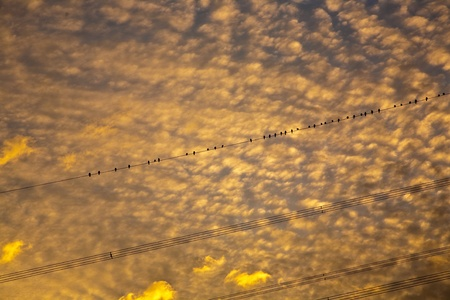 beautiful sky with clouds in early morning at sunrise, birds on wire of electrical tower photo