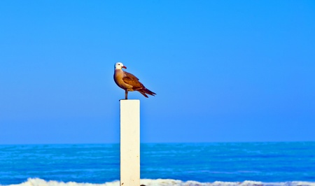 seagul sitting on a trunk for volleyball at the beach and watches the scene photo