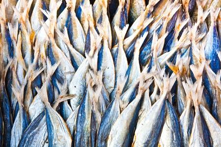stockfish at the market photo