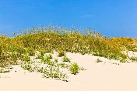 dune: pasto alto en una playa durante temporada tormentosa