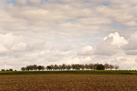 farming area: trees, alley in beautiful landscape in middle of the farming area with beautiful sky Stock Photo