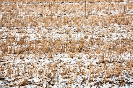 acres: acres with snow in winter in beautiful light and structure