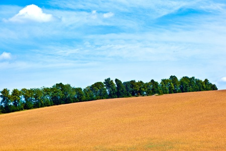 farming area: landscape with row of trees in a farming area under blue sky