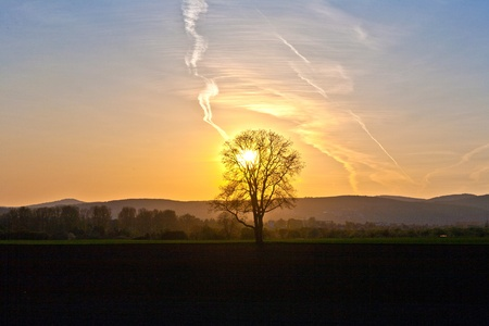 sunset with blue sky and tree photo