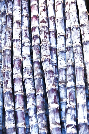 fresh bamboo offered at the outdoor vegetables market photo
