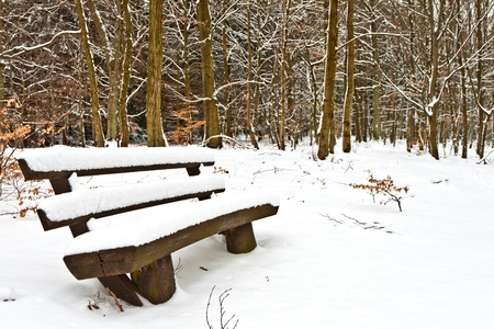 bench in forest in winter with snow photo