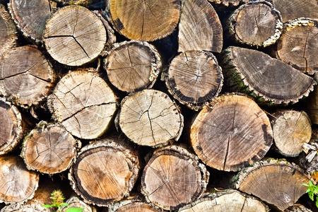 woodpile: woodpile (round) Stock Photo