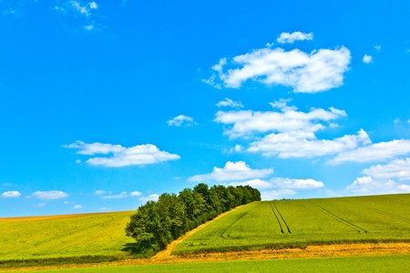 rural landscape with fields Stock Photo - 10695024