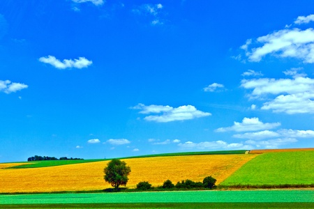 rural landscape with fields Stock Photo - 10694643