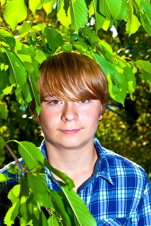 portrait of cute boy in leaves of the tree Stock Photo - 10738127