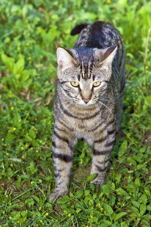cat in the garden Stock Photo - 10725793