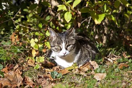 cute kitten lying in the garden photo