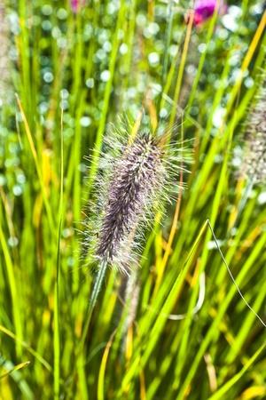 bundesgartenschau: detail of beautiful grass in the meadow
