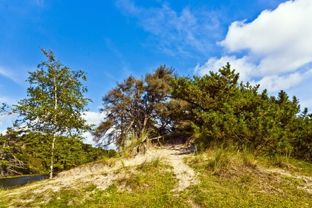 untouched: untouched nature on the island of Fanoe in Denmark