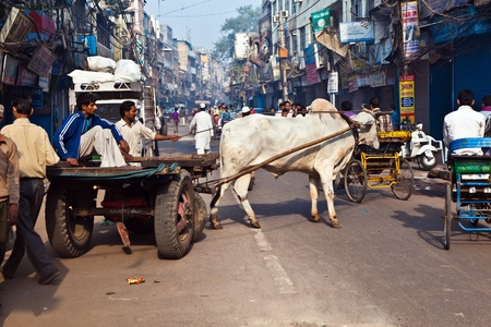 DELHI, INDIA - NOV 9: Ox cart transportation on early morning on November 08,2011 in Delhi, India. The ox chart is a  common cargo  transportation in the narrow streets of old Delhi.