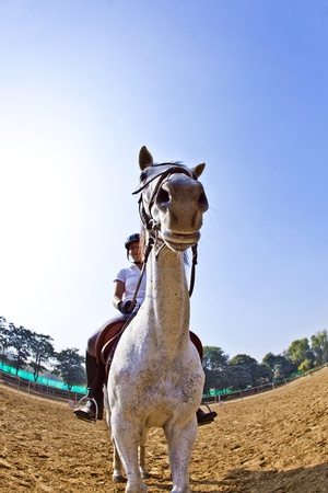 female rider trains the horse in the riding course photo