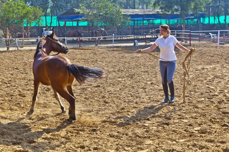 vaulting: female rider trains the horse in the riding course