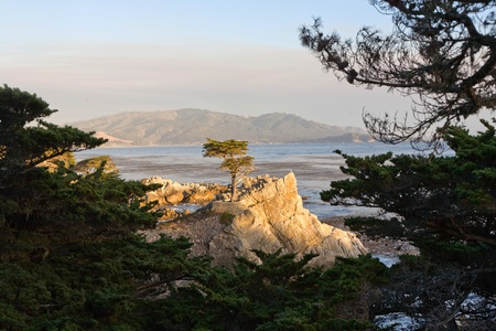 PEBBLE BEACH, USA - JULY 26: Lonely Cypress Tree standing isolated on a rock in sunset on July 26,2008 in Pebble Beach, USA.  The tree is around 250 years old and one of the  famous landmarks of California.