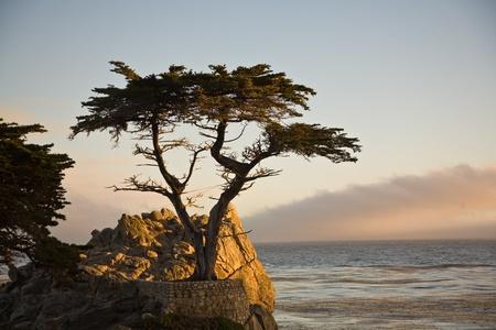 carmel: PEBBLE BEACH, EE.UU. - 26 de julio: de pie Lonely Tree Cypress aislado en una roca en la puesta del sol en julio 26,2008 en Pebble Beach, EE.UU.. El �rbol es de alrededor de 250 a�os y es uno de los lugares famosos de California.
