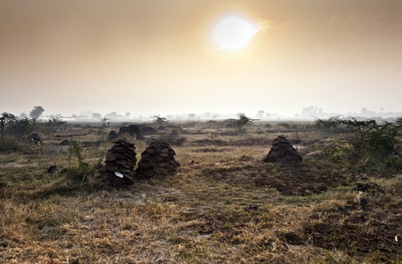 fields with trees in morning fog in India Stock Photo - 11759997