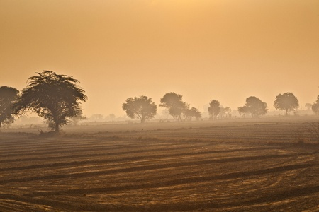 fields with trees in morning fog in India photo