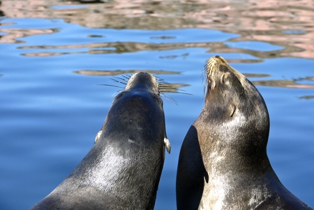 sea lions at the lake photo