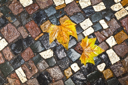 paveway: pattern of wet cobble stone on sidewalk with leaf Stock Photo