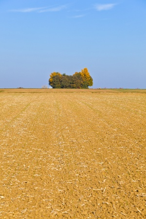 allegory painting: natural full frame background with wtree and field after harvest Stock Photo