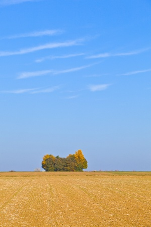 sere: natural full frame background with wtree and field after harvest Stock Photo