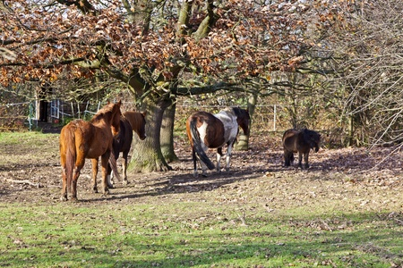 horses on a meadow under a tree photo