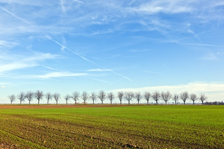 fields with tree alley at horizon photo