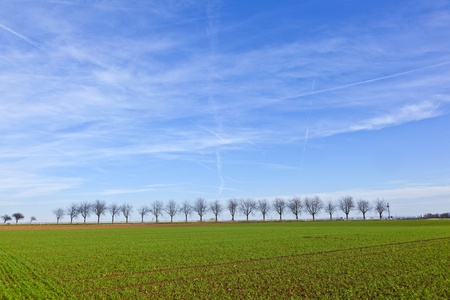 green field with tree alley photo
