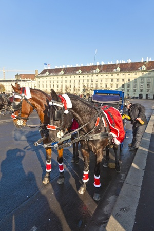 VIENNA, AUSTRIA - NOV 26: driver of the fiaker wait for tourists on November 26,2010 in Vienna, Austria. Since the 17th century, the horse-drawn carriages characterize Viennas cityscape. Stock Photo - 12073869
