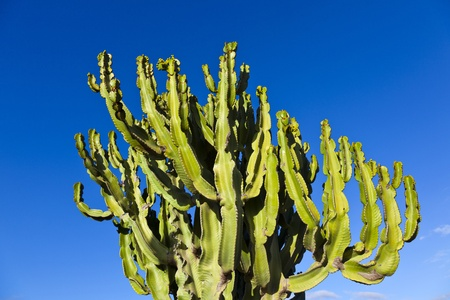 cactus with clear blue sky photo
